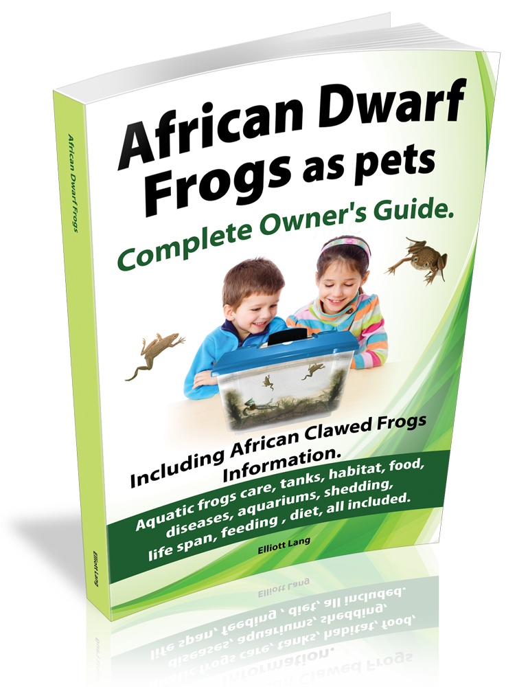 african dwarf frogs care